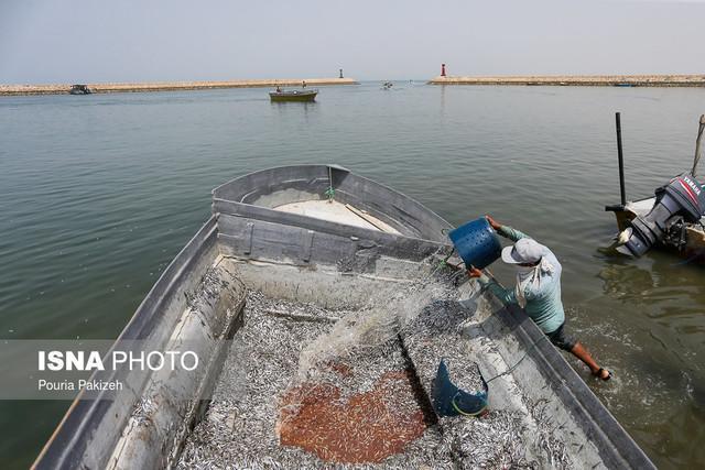 صید در آب های جنوب به چینی ها سپرده نشده فقط کشتی ها چینی هستند