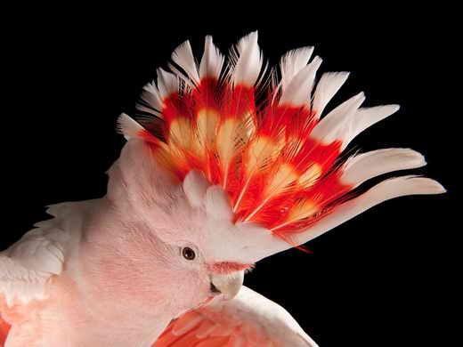 طوطی بهشتی + عکس