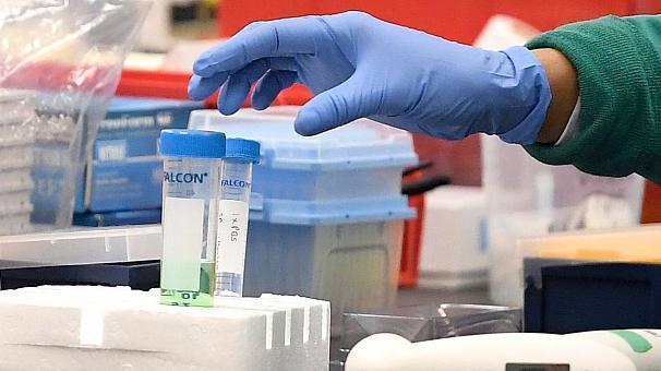 کمیاب و گران شدن میمون های چین به علت ساخت واکسن