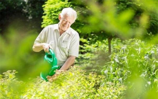 تجربه کشورهای پیروز در توانمندسازی اقتصادی سالمندان