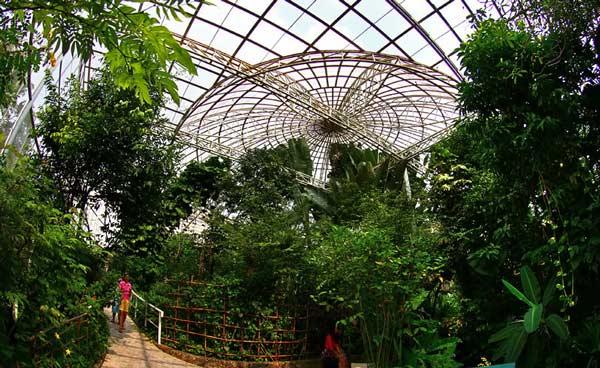همه چیز درباره باغ پروانه بانکوک